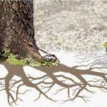 Revelador descubrimiento: Los árboles se comunican entre sí, se ayudan y alertan de peligros